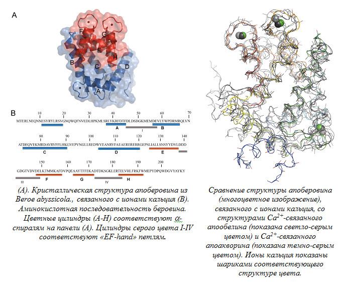 Ионы кальция показаны шариками соответствующего структуре цвета.