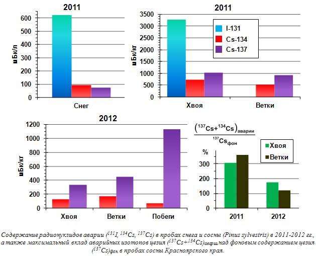 Содержание радионуклидов аварии (131I, 134Cs, 137Cs) в пробах снега и сосны (Pinus sylvestris) в 2011-2012 гг., а также максимальный вклад аварийных изотопов цезия (137Cs+134Cs)аварии над фоновым содержанием цезия (137Cs)фон в пробах сосны Красноярского края.