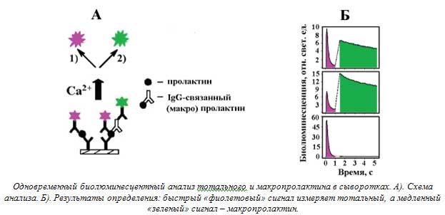 Одновременный биолюминесцентный анализ тотального и макропролактина в сыворотках. А). Схема анализа. Б). Результаты определения: быстрый «фиолетовый» сигнал измеряет тотальный, а медленный «зеленый» сигнал – макропролактин.