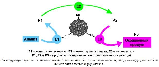 Схема функционирования тест-системы биохимической диагностики холестерина, сконструированной на основе наноалмазов и ферментов.