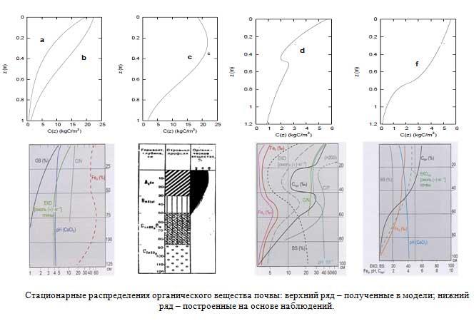 Стационарные распределения органического вещества почвы: верхний ряд – полученные в модели; нижний ряд – построенные на основе наблюдений.