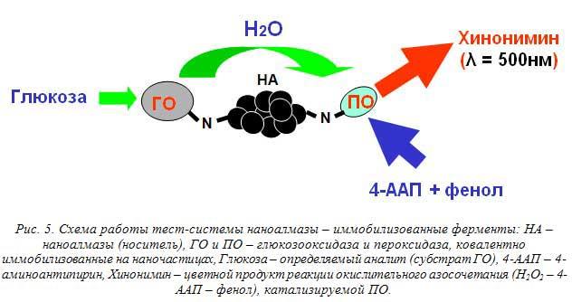 Рис. 5. Схема работы тест-системы наноалмазы – иммобилизованные ферменты: НА – наноалмазы (носитель), ГО и ПО – глюкозооксидаза и пероксидаза, ковалентно иммобилизованные на наночастицах, Глюкоза – определяемый аналит (субстрат ГО), 4-ААП – 4-аминоантипирин, Хинонимин – цветной продукт реакции окислительного азосочетания (Н2О2 – 4-ААП – фенол), катализируемой ПО.