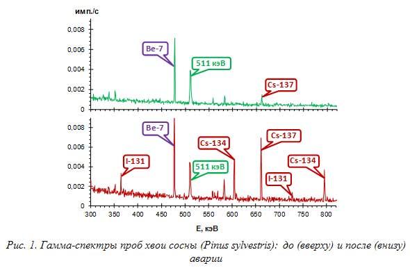Рис. 1. Гамма-спектры проб хвои сосны (Pinus sylvestris): до (вверху) и после (внизу) аварии
