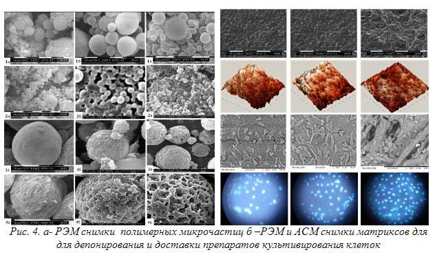 Рис. 4. а- РЭМ снимки  полимерных микрочастиц б –РЭМ и АСМ снимки матриксов для для депонирования и доставки препаратов культивирования клеток
