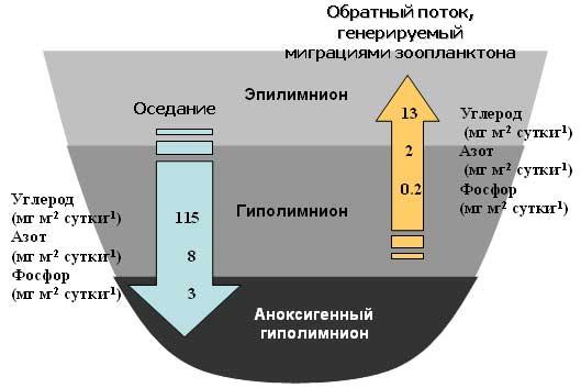 Распределение и стехиометрия незаменимых биохимических компонентов